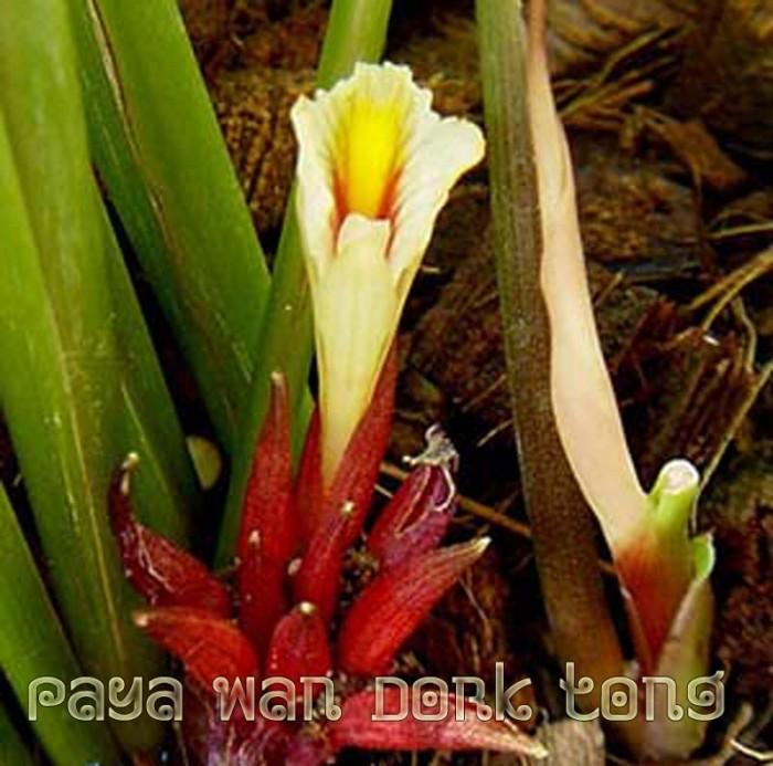 Paya Wan Dork Tong