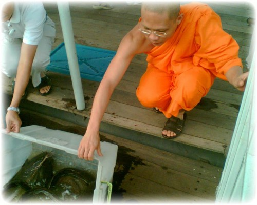 Making Merit Freeing Catfish at Wat Makham