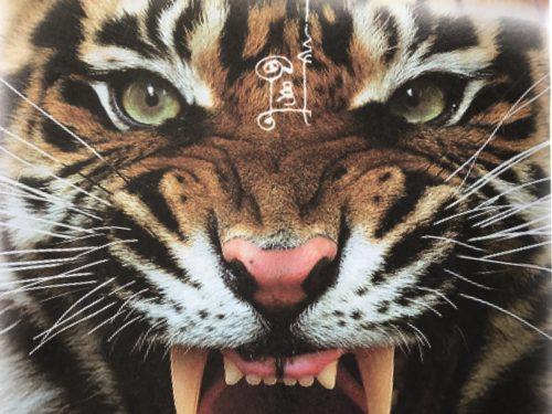 Suea - Tiger Wicha